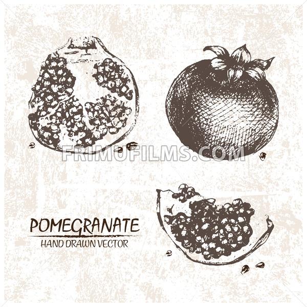Digital vector detailed pomegranate hand drawn - frimufilms.com