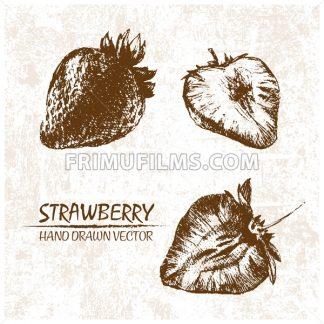 Digital vector detailed strawberry hand drawn - frimufilms.com