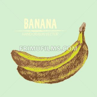 Digital vector color detailed banana hand drawn retro illustration collection set. Thin artistic linear pencil outline. Vintage ink flat style, engraved simple doodle sketches. Isolated objects - frimufilms.com
