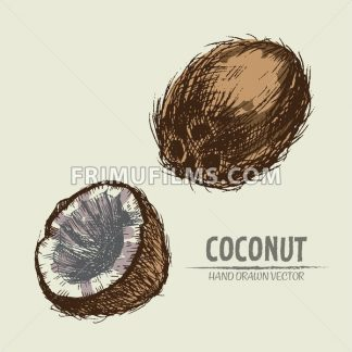 Digital vector color detailed coconut hand drawn retro illustration collection set. Thin artistic linear pencil outline. Vintage ink flat style, engraved simple doodle sketches. Isolated objects - frimufilms.com