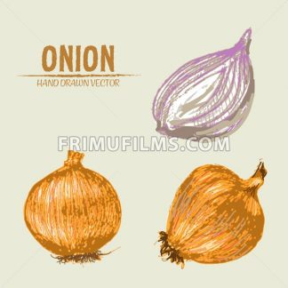Digital vector color detailed onion hand drawn retro illustration collection set. Thin artistic linear pencil outline. Vintage ink flat style, engraved simple doodle sketches. Isolated objects - frimufilms.com