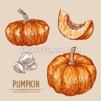 Digital vector color detailed pumpkin hand drawn retro illustration collection set. Thin artistic linear pencil outline. Vintage ink flat style, engraved simple doodle sketches. Isolated objects - frimufilms.com