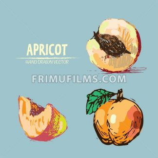 Digital vector detailed apricot hand drawn retro illustration collection set. Thin artistic linear pencil outline. Vintage ink flat style, engraved simple doodle sketches. Isolated objects - frimufilms.com