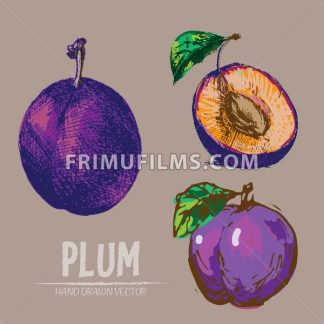 Digital vector detailed color plum hand drawn retro illustration collection set. Thin artistic linear pencil outline. Vintage ink flat style, engraved simple doodle sketches. Isolated objects - frimufilms.com