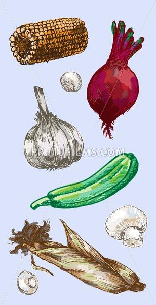Digital vector detailed color vegetable hand drawn retro illustration collection set. Thin artistic linear pencil outline. Vintage ink flat style, engraved simple doodle sketches. - frimufilms.com
