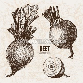 Digital vector detailed line art beet vegetable hand drawn retro illustration collection set. Thin artistic pencil outline. Vintage ink flat style, engraved simple doodle sketches. Isolated objects - frimufilms.com