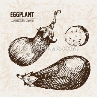 Digital vector detailed line art eggplant vegetable hand drawn retro illustration collection set. Thin artistic pencil outline. Vintage ink flat style, engraved simple doodle sketches. Isolated - frimufilms.com