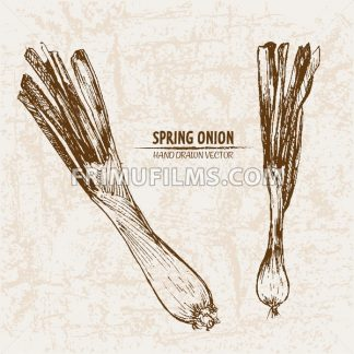Digital vector detailed line art spring onion vegetable hand drawn retro illustration collection set. Thin artistic pencil outline. Vintage ink flat style, engraved simple doodle sketches. Isolated - frimufilms.com