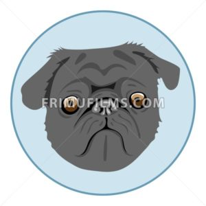 Digital vector pug dog face, in blue circle, flat style - frimufilms.com