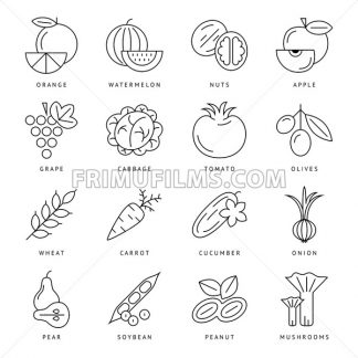 Digital black vegetable icons set infographics drawn simple line art, onion squash pear orange apple grape carrot wallnut peas watermelon cabage, flat, organic vegetarian food - frimufilms.com