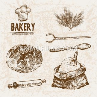 Digital vector detailed line art bakery bread and dried wheat hand drawn retro illustration collection set. Thin artistic pencil outline. Vintage ink flat, engraved mill doodle sketches. Isolated - frimufilms.com