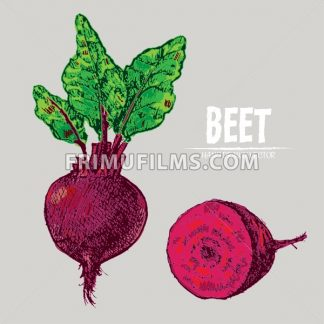 Digital vector detailed line art color beet vegetable hand drawn retro illustration collection set. Thin artistic pencil outline. Vintage ink flat style, engraved simple doodle sketches. Isolated - frimufilms.com