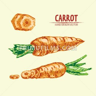 Digital vector detailed line art color carrot vegetable hand drawn retro illustration collection set. Thin artistic pencil outline. Vintage ink flat style, engraved simple doodle sketches. Isolated - frimufilms.com