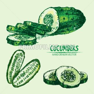 Digital vector detailed line art color cucumber vegetable hand drawn retro illustration collection set. Thin artistic pencil outline. Vintage ink flat style, engraved simple doodle sketches. Isolated - frimufilms.com