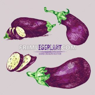 Digital vector detailed line art color eggplant vegetable hand drawn retro illustration collection set. Thin artistic pencil outline. Vintage ink flat style, engraved simple doodle sketches. Isolated - frimufilms.com
