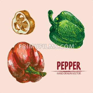 Digital vector detailed line art color pepper vegetable hand drawn retro illustration collection set. Thin artistic pencil outline. Vintage ink flat style, engraved simple doodle sketches. Isolated - frimufilms.com
