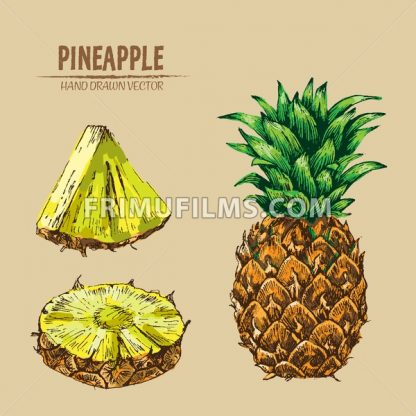 Digital vector detailed line art color pineapple fruit hand drawn retro illustration collection set. Thin artistic pencil outline. Vintage ink flat style, engraved simple doodle sketches. Isolated - frimufilms.com