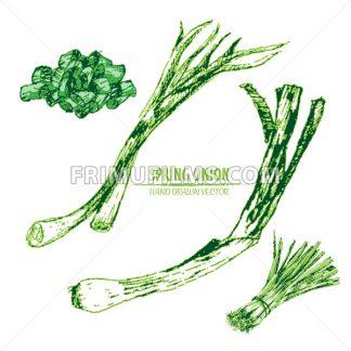 Digital vector detailed line art color spring onion vegetable hand drawn retro illustration collection set. Thin artistic pencil outline. Vintage ink flat style, engraved simple doodle sketches - frimufilms.com