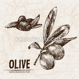 Digital vector detailed line art olive and oil hand drawn retro illustration collection set, stove oven. Thin artistic pencil outline. Vintage ink flat, engraved simple doodle sketches. Isolated - frimufilms.com