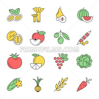 Digital vector green vegetable icons set infographics drawn simple line art, onion squash pear orange apple grape carrot wallnut peas watermelon cabage, flat, organic vegetarian food - frimufilms.com