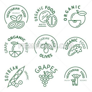 Digital vector green vegetable icons set infographics drawn simple line art, onion squash pear orange apple grape carrot wallnut peas watermelon flower cabage, flat style, organic and vegetarian food - frimufilms.com