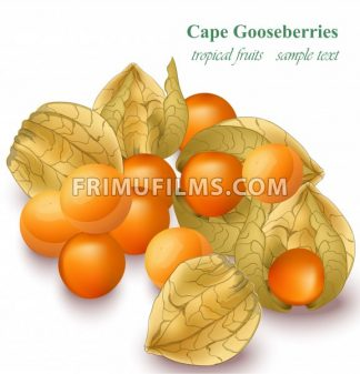 Cape gooseberries realistic Vector illustration isolated on white - frimufilms.com