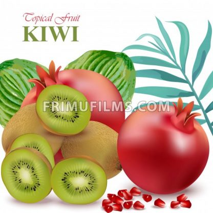 Exotic fruits avocado, papaya, kiwi, pomegranate palm leaves Vector illustrations - frimufilms.com