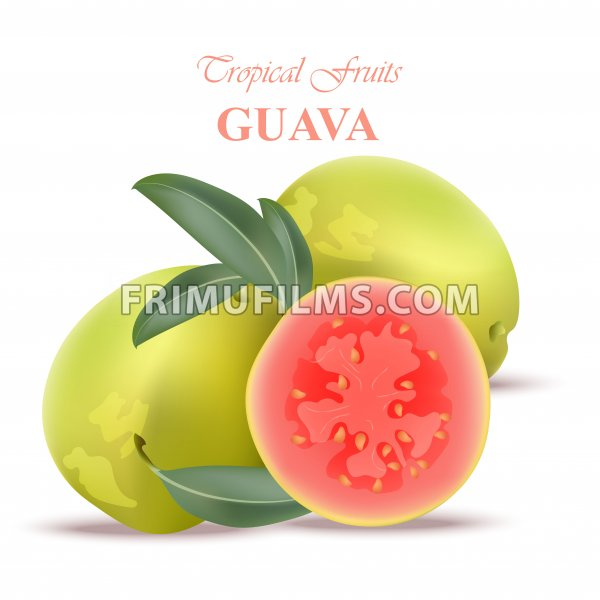 Guava fruit realistic Vector isolated on white backgrounds - frimufilms.com