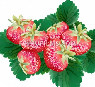 Strawberry delicious Vector top view green leaves - frimufilms.com