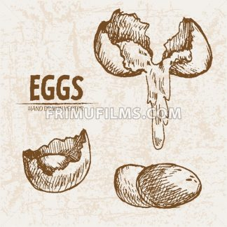 Digital vector detailed line art splitted scratch and whole eggs hand drawn retro illustration collection set. Thin artistic pencil outline. Vintage ink flat, engraved mill doodle sketches. Isolated - frimufilms.com