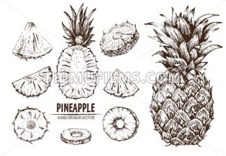 Digital vector detailed line art pineapple fruit hand drawn retro illustration collection set. Thin artistic pencil outline. Vintage ink flat style, engraved simple doodle sketches. Isolated - frimufilms.com