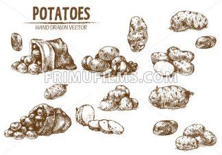 Digital vector detailed line art potato vegetable hand drawn retro illustration collection set. Thin artistic pencil outline. Vintage ink flat, engraved simple doodle sketches. Isolated - frimufilms.com