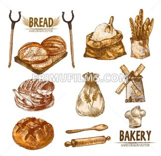 Digital color vector bundle set detailed line art golden loaf of rye bread, slices and wheat hand drawn illustration set. Thin artistic pencil outline. Vintage ink flat, engraved mill doodle sketches - frimufilms.com