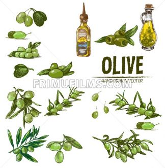 Digital color vector detailed line art fresh green olives on branches and oil bottle hand drawn retro illustration set. Thin pencil outline. Vintage ink flat, engraved doodle sketches. Isolated - frimufilms.com