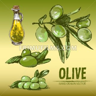 Digital color vector detailed line art fresh green olives on branches and oil pitcher hand drawn retro illustration set. Thin pencil outline. Vintage ink flat, engraved doodle sketches. Isolated - frimufilms.com