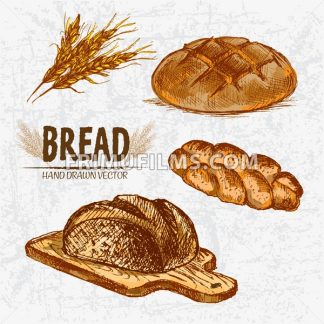 Digital color vector detailed line art golden braided and round rye bread on wooden chopping board, wheat hand drawn set. Thin outline. Vintage ink flat, engraved mill doodle sketches. Isolated - frimufilms.com