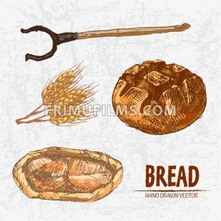 Digital color vector detailed line art golden loaf of round bread, khachapuri, oven fork and wheat hand drawn retro set. Thin pencil outline. Vintage ink flat, engraved mill doodle sketches. Isolated - frimufilms.com