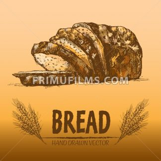Digital color vector detailed line art golden loaf of rye bread, slices and wheat hand drawn illustration set. Thin artistic pencil outline. Vintage ink flat, engraved mill doodle sketches. Isolated - frimufilms.com
