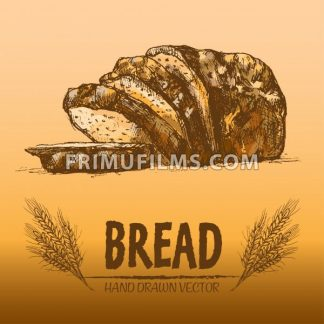 Digital color vector detailed line art golden loaf of rye bread, slices and wheat hand drawn illustration set. Thin artistic pencil outline. Vintage ink flat, engraved mill doodle sketches. Isolated - frimufilms