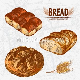Digital color vector detailed line art golden loaves of round and ciabatta bread, dinner roll hand drawn retro illustration set. Thin outline. Vintage ink flat, engraved mill doodle sketches. Isolated - frimufilms.com