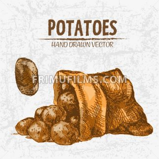 Digital color vector detailed line art golden potatoes falling from organic sack hand drawn retro illustration set. Thin pencil artistic outline. Vintage ink flat, engraved doodle sketches. Isolated - frimufilms.com