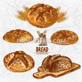 Digital color vector detailed line art golden round rye bread on wooden chopping board, wheat hand drawn set. Thin pencil artistic outline. Vintage ink flat, engraved mill doodle sketches. Isolated - frimufilms.com