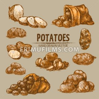 Digital color vector detailed line art golden sliced and whole potatoes, falling from sack hand drawn retro illustration set. Thin pencil outline. Vintage ink flat, engraved doodle sketches. Isolated - frimufilms.com