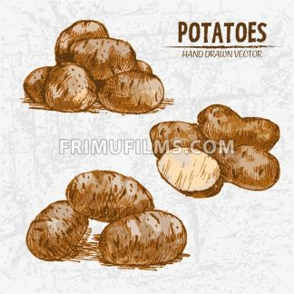 Digital color vector detailed line art golden sliced and whole potatoes hand drawn retro illustration set. Thin pencil artistic outline. Vintage ink flat, engraved doodle sketches. Isolated - frimufilms.com