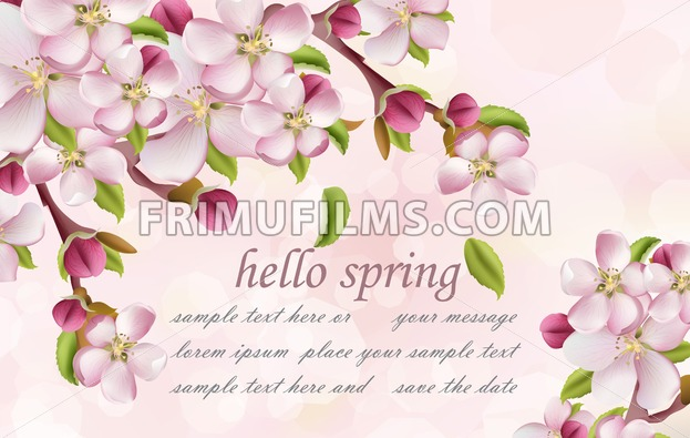 Cherry flowers Spring background Vector. Pink floral branches with place for text - frimufilms.com