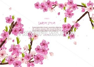 Cherry flowers Vector. Spring card background decor - frimufilms.com