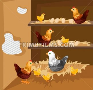 Chicken nesting in a coop Vector. Ecological free range growing animals - frimufilms.com