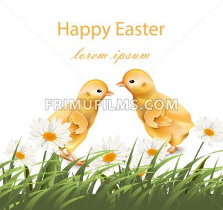 Happy Easter chickens card Vector. Chamomile field background illustration - frimufilms.com