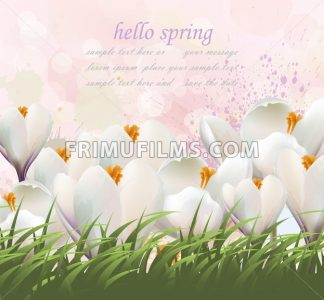 Hello spring flowers card Vector. Watercolor white flowers and grass. Lovely greeting colorful splash illustration background - frimufilms.com