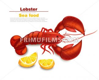 Lobster Vector realistic isolated. Fresh Detailed seafood 3d illustration - frimufilms.com